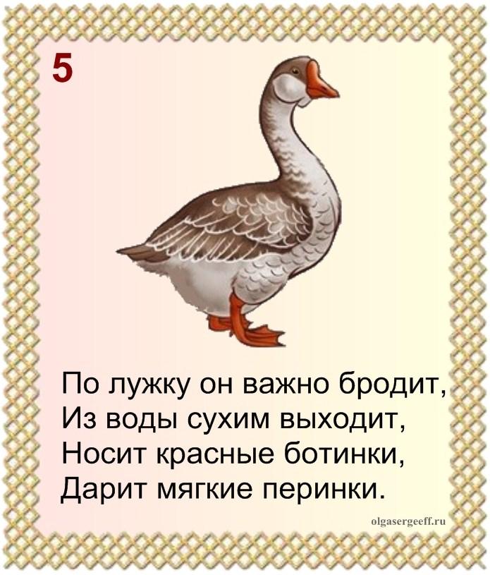 Кроссворд 3 домашние птицы